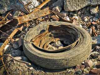 Tire in landfill